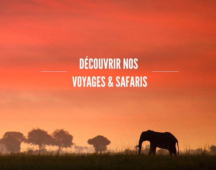 Découvrir nos Voyages et Safaris