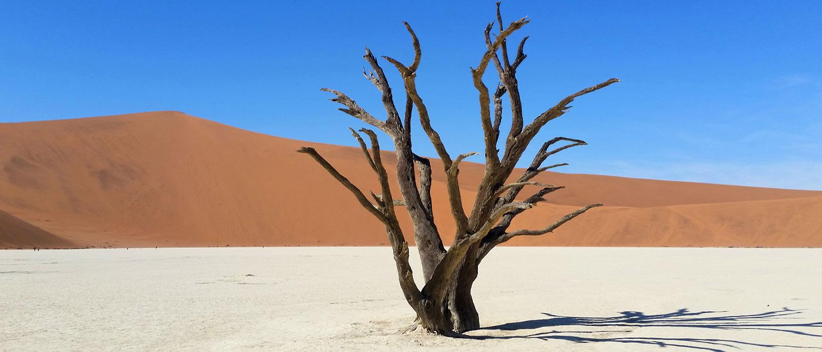 Désert du Namib Les arbres fossilisés de Dead Vlei