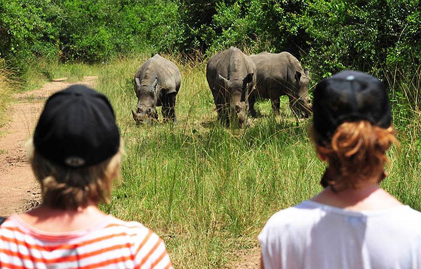 Ouganda, aidez à sauver les rhinos