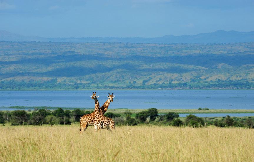 Ouganda, découvrez le Nil Blanc