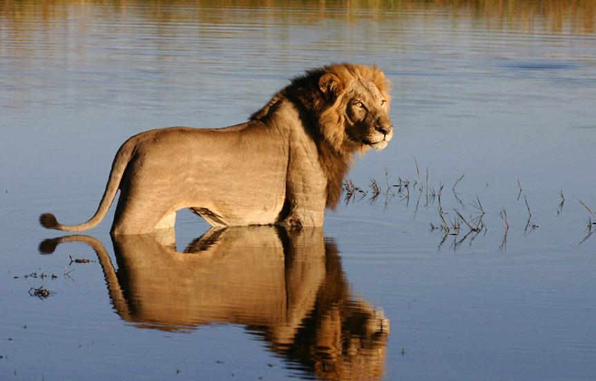 Safari camping au Botswana avec guide francophone