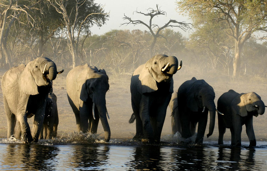 Le Botswana, bon élève de l'écotourisme
