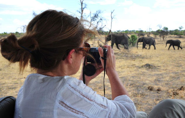 safari au Zimbawe