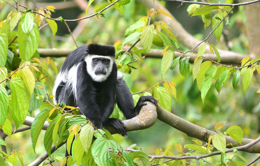 Safari en Tanzanie : le Parc National d'Arusha