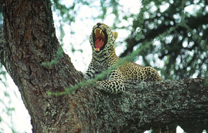Safari en Tanzanie, le parc de Manyara