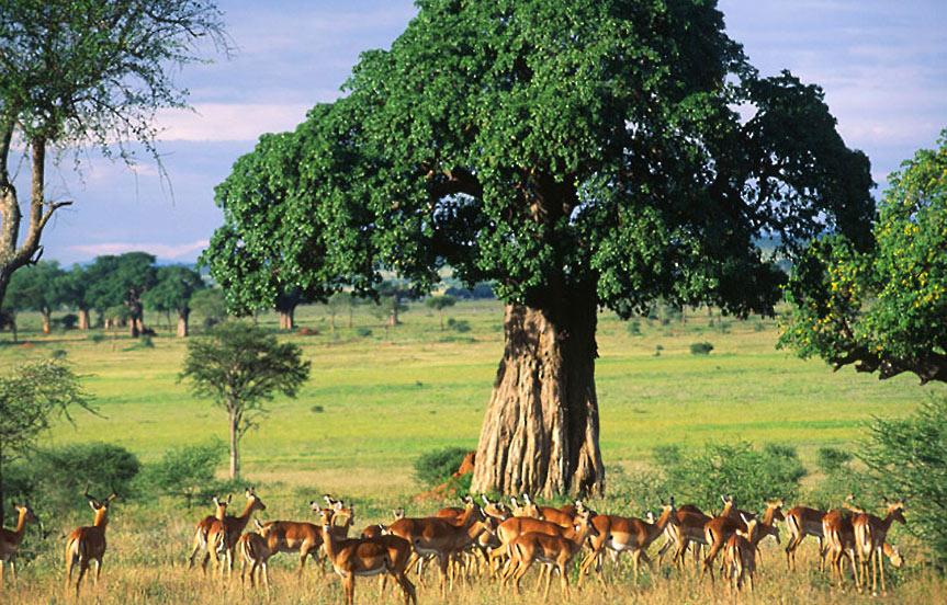 Safari en Tanzanie : le parc de Tarangire