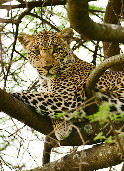 Safari en Tanzanie, les parcs essentiels