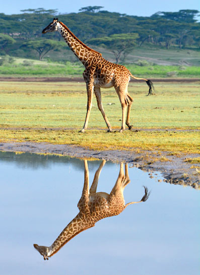 Safari Luxe en Tanzanie et Zanzibar
