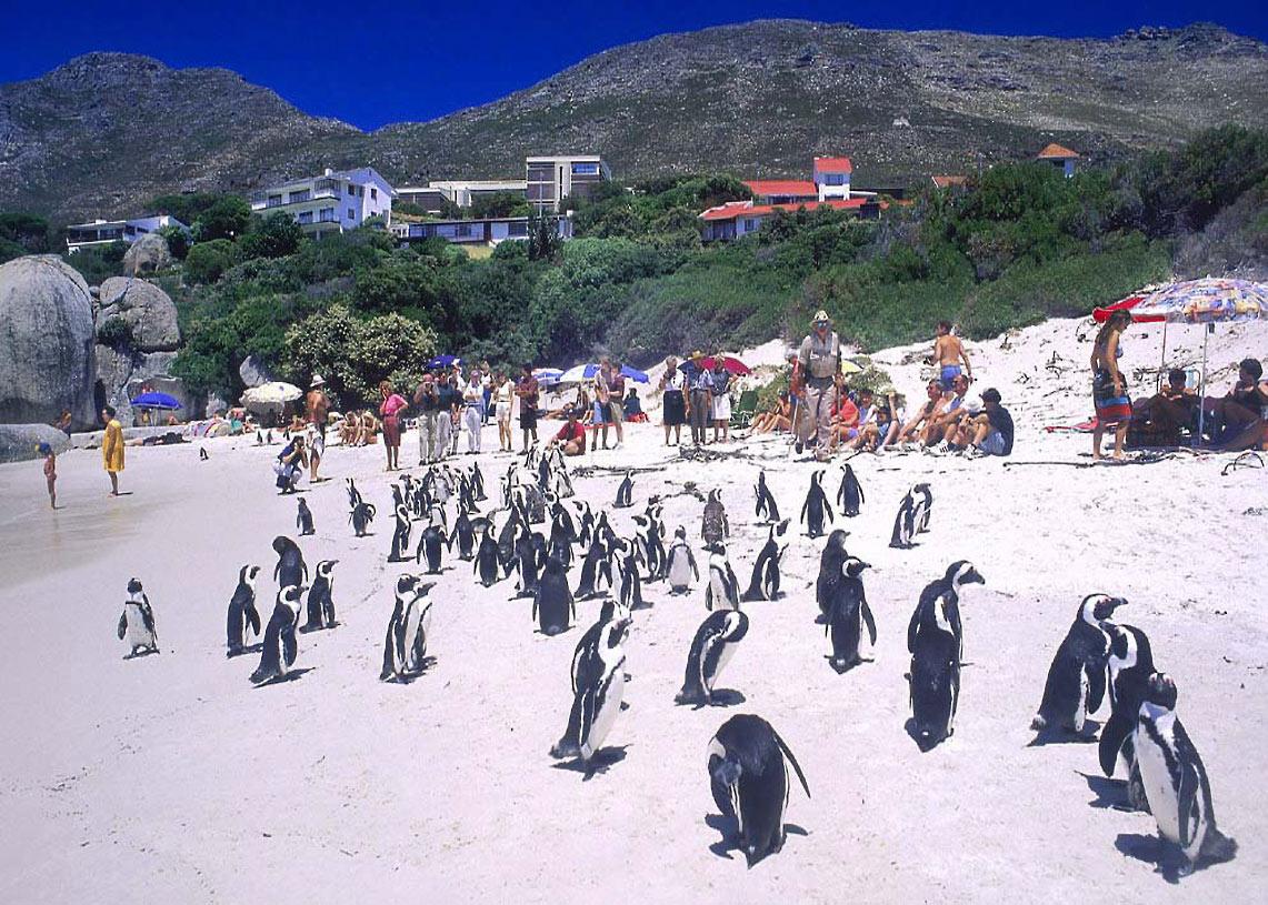 Afrique du Sud, la ville du cap
