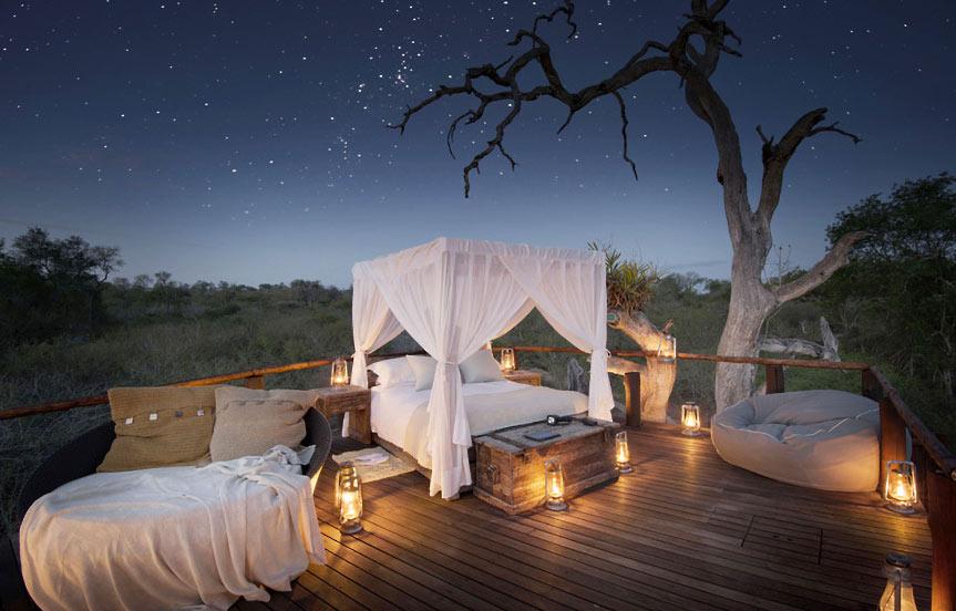 Safari étoilé