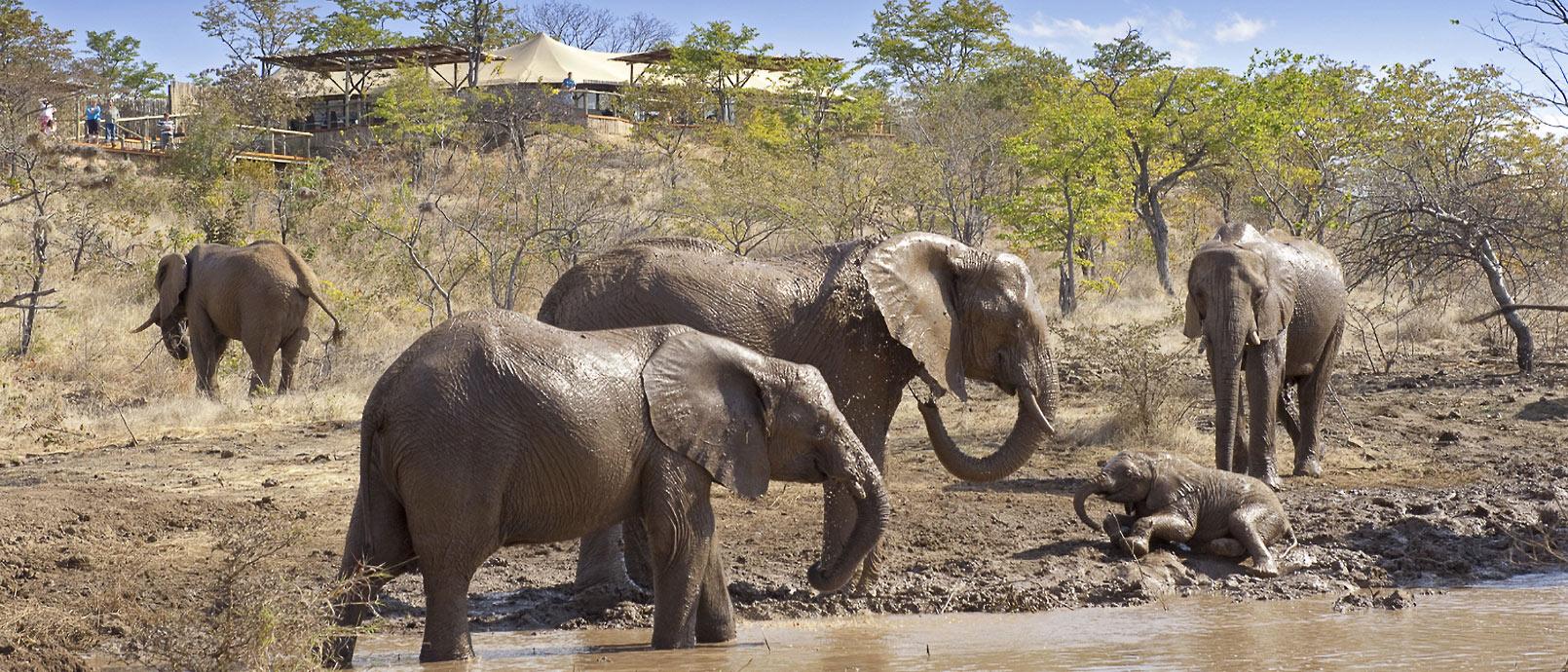 Elephant Camp Le Zimbabwe en liberté