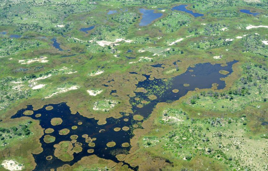 Safari au Botswana, le delta de l'Okavango