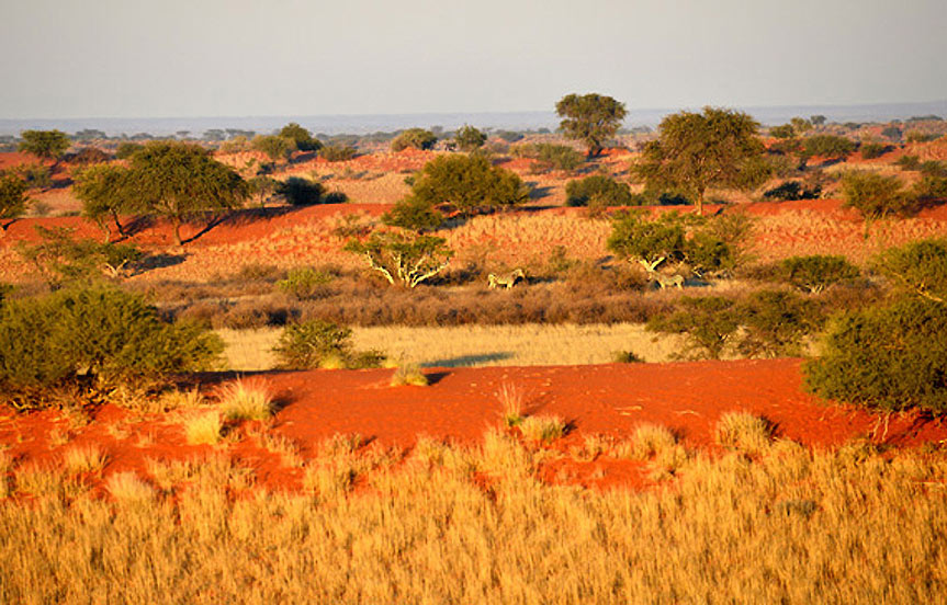 Safari en Namibie : le désert du Kalahari