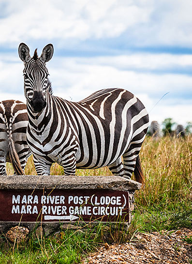 Mara River Post lodge