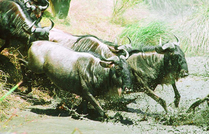 La rivière Mara