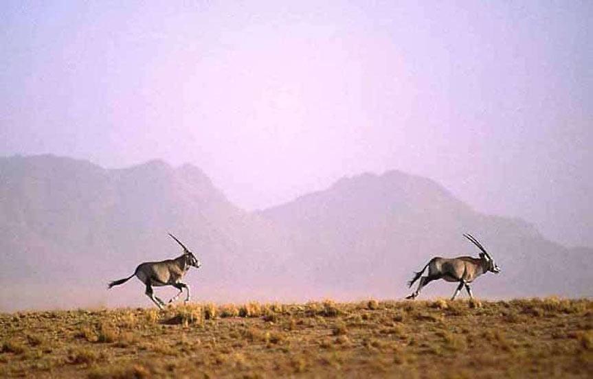 Safari en Afrique en français