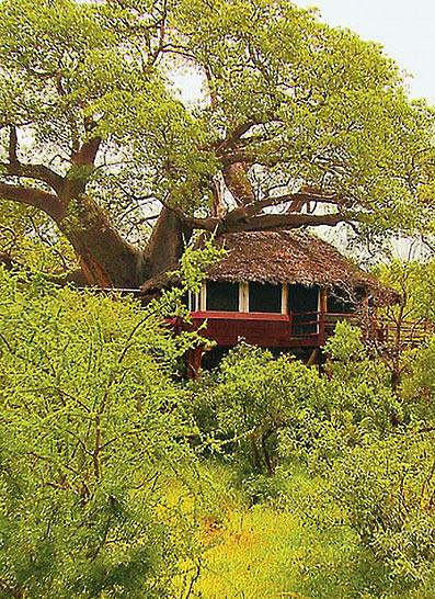 Treetops Tarangire lodge