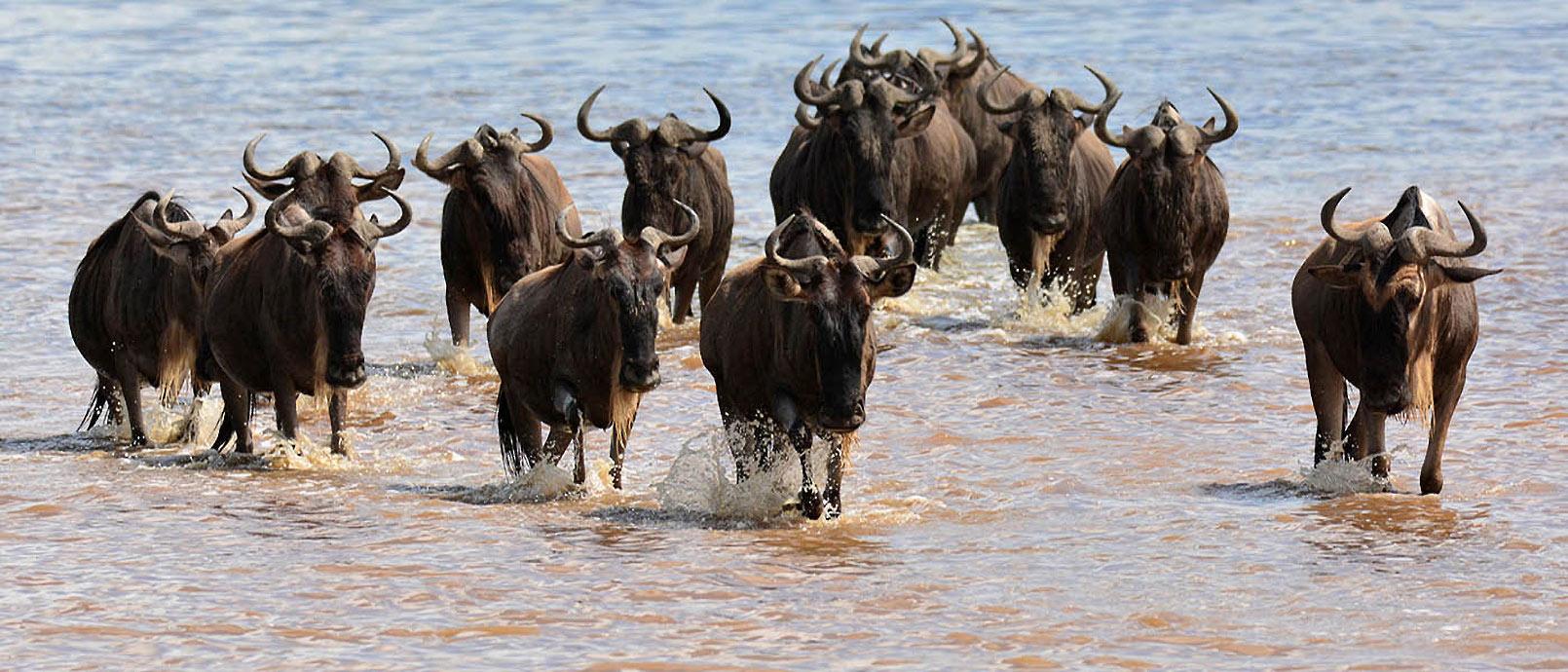 Safari en Tanzanie «Grande Migration»