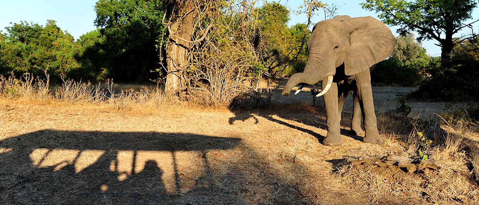 Anne-Sophe vit et travaille à Lusaka, capitale de la Zambie.