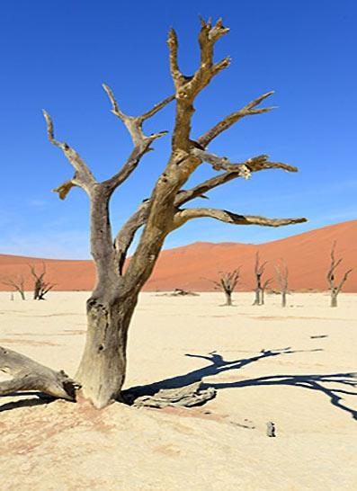 La Namibie en lodges et bivouacs (10 jours)