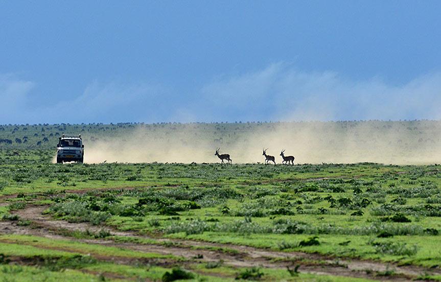 Ndutu, berceau de la Grande Migration
