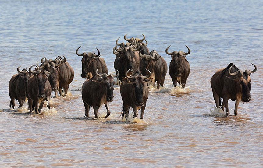 Safari en Tanzanie : la rivière Mara