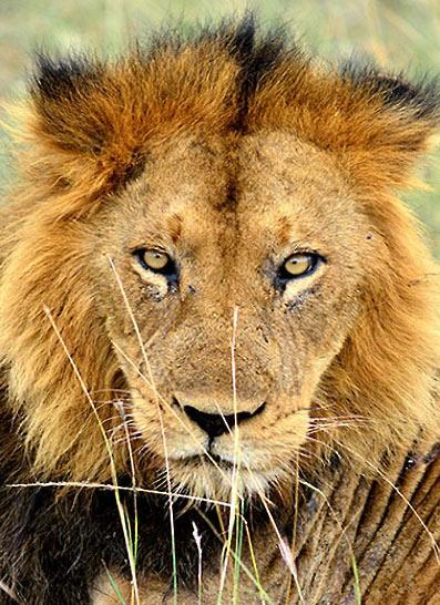 Safari hors-normes en Tanzanie