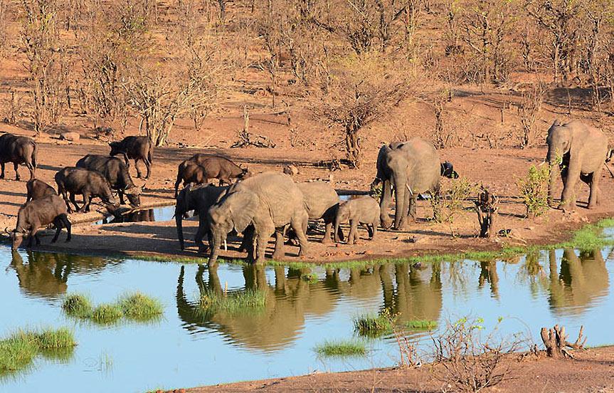 Tanzanie : la réserve du Sélous