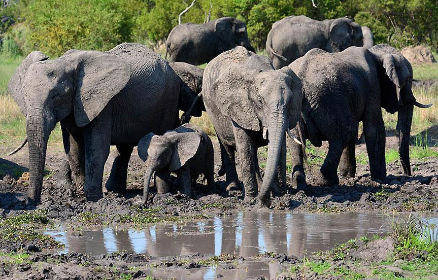 Safari en Tanzanie: Le parc national de Ruaha
