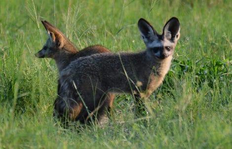 safari à Tanzanie