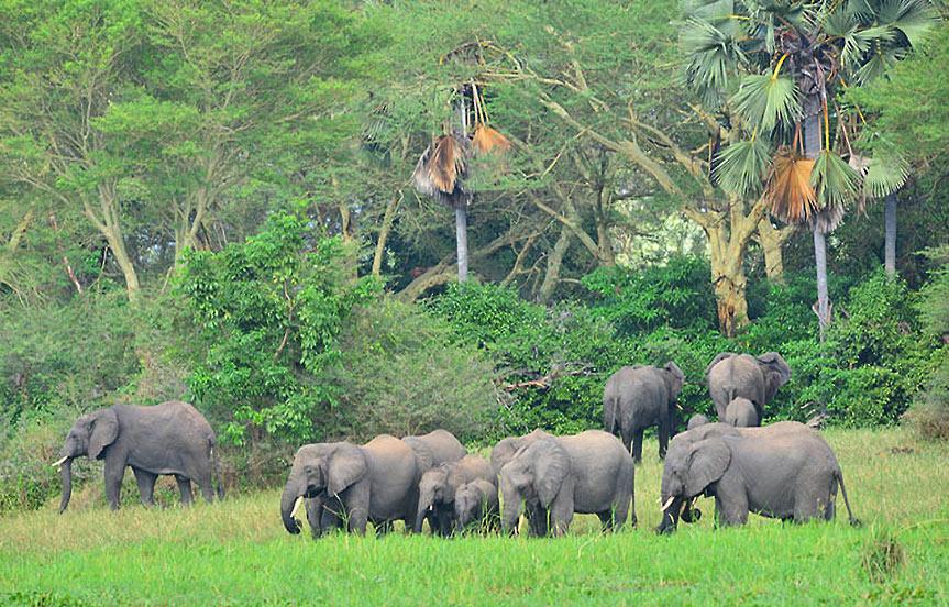 safari au malawi