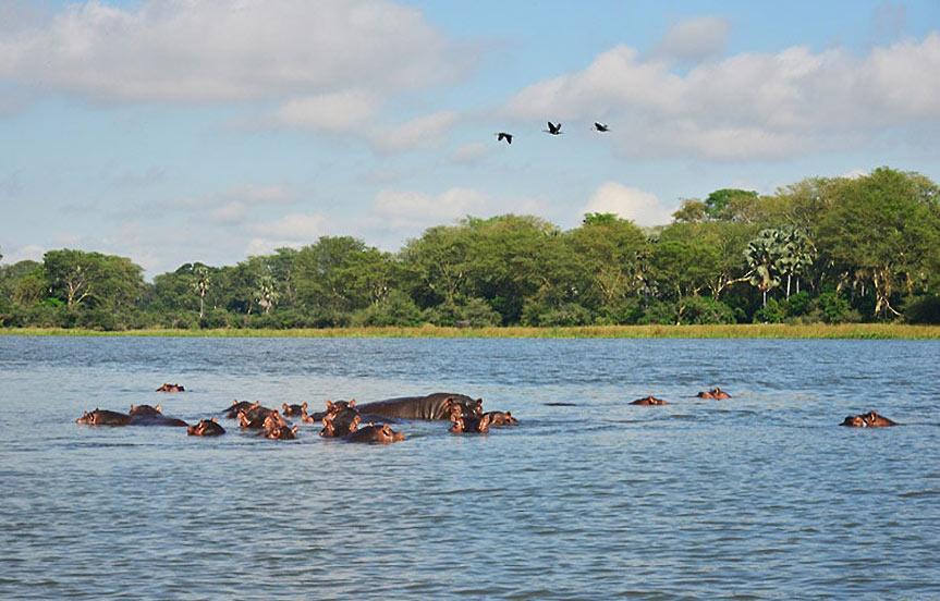 Safari au Malawi : le parc de Liwonde