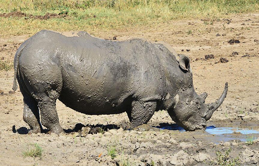 Safari en Afrique du Sud : la réserve de Hluhluwe-Umfolozi