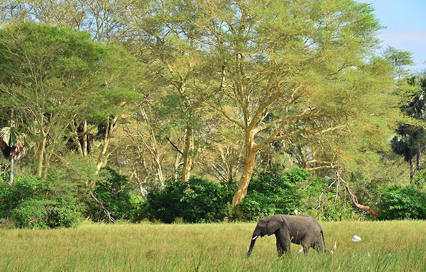 Safari au Malawi: la réserve de Majete